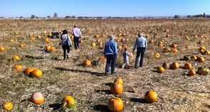 Pumpkin Patch, Pocatello pumpkin